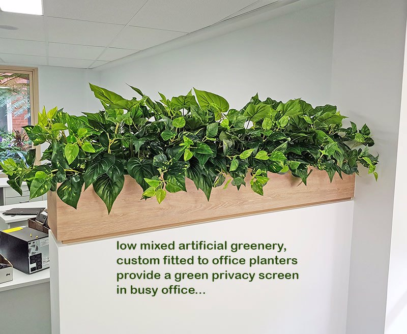 Small privacy planters in office...